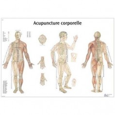 Planche anatomique Acupuncture corporelle