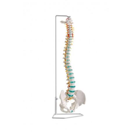 Colonne vertébrale flexible A250