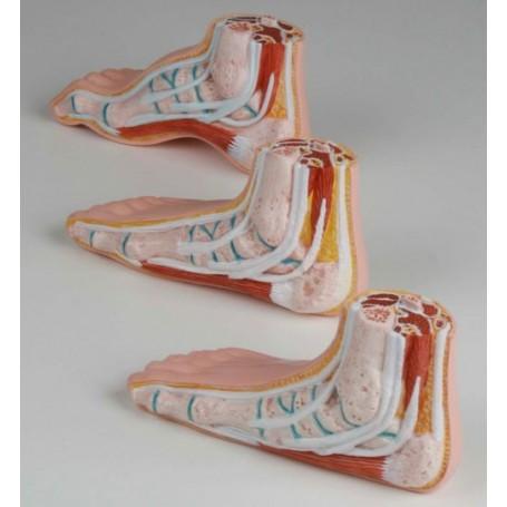 Série de pieds mini, 3 modèles