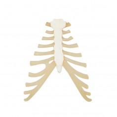 Sternum avec cartilage de la côte
