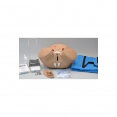 Simulateur bisexué pour cathétérisme et soins de stomie