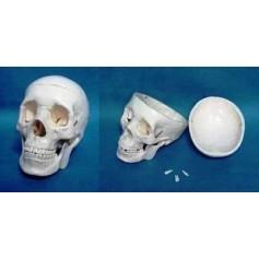 Crâne humain plastique 3 pièces