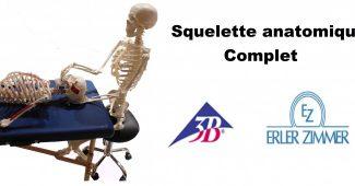 squelette anatomique