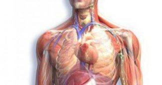 logiciel anatomique