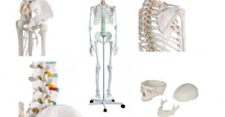 squelette oscar