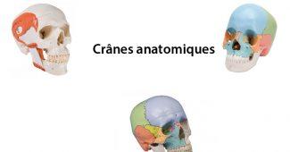 crane anatomique