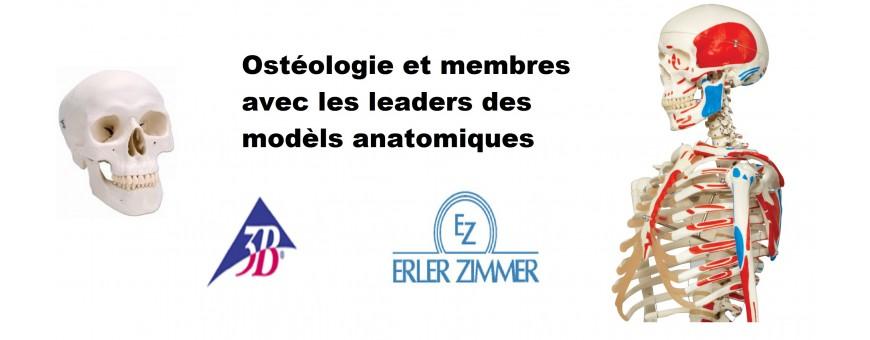 Ostéologie et membres